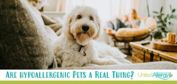 Are hypoallergenic pets a real thing?