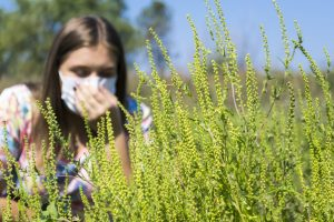 Ragweed and Fall Pollen Allergies